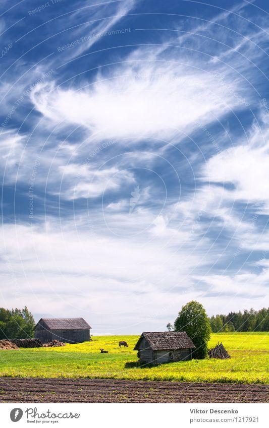 Landhaus mit Feld und Kühen grün Sonne Baum Blume Landschaft Wolken Tier Haus Architektur Wiese Gras Horizont Business Wetter Aussicht Europa