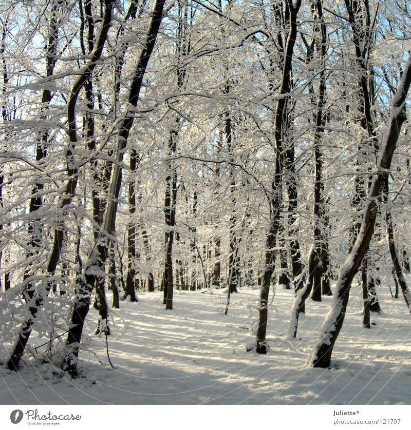 Im Märchenwald da ist´s so kalt! weiß Winter Januar Baum Minusgrade Wald Verkehr Schnee Schnefall bedecken Frost Spaziergang laufen