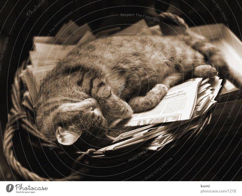 Lisa vom Carsten schlafende Katze