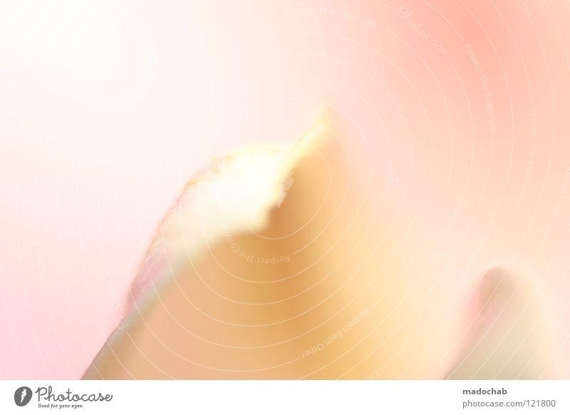 EIN TRAUM IN ROSA träumen zart fein Romantik kuschlig Zärtlichkeiten verwundbar filigran Freundlichkeit rosa magenta Glätte traumhaft Watte schön Beiboot