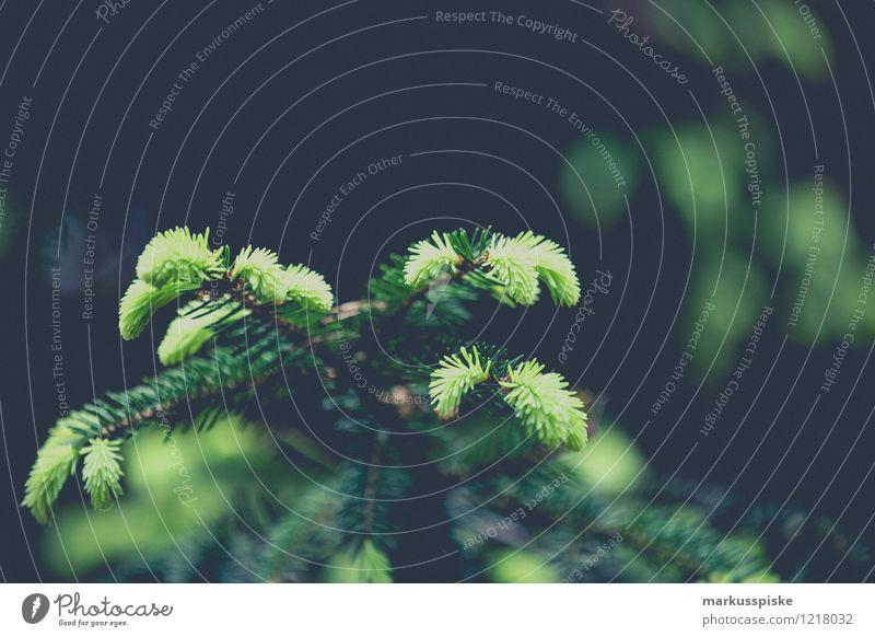 tannenzweig Tier Sommer Pflanze Baum Blüte Zweig Zweige u. Äste Tannenzweig Blühend leuchten Bayerische Staatsforsten Bayern Veldensteiner Forst Wildpark