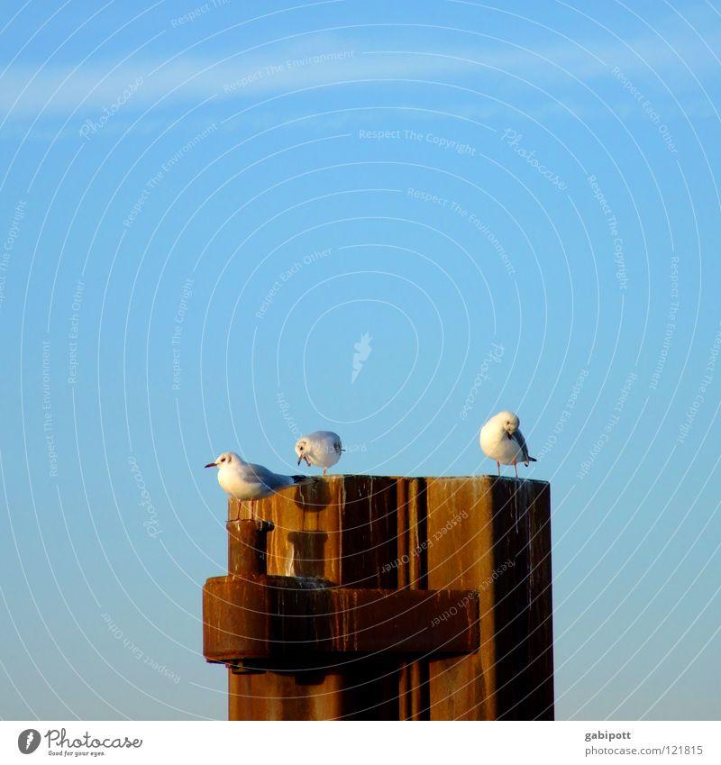 SonntagsPutz schön Himmel blau ruhig Einsamkeit Erholung Zufriedenheit Vogel sitzen Hafen Reinigen Sehnsucht Rost Möwe Fernweh Schnabel