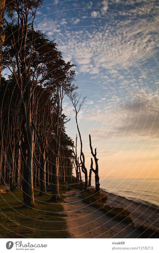 Gespensterwald Natur Ferien & Urlaub & Reisen Baum Erholung Meer Landschaft ruhig Wolken Wald Umwelt Küste Wetter Idylle Schönes Wetter Romantik Ostsee
