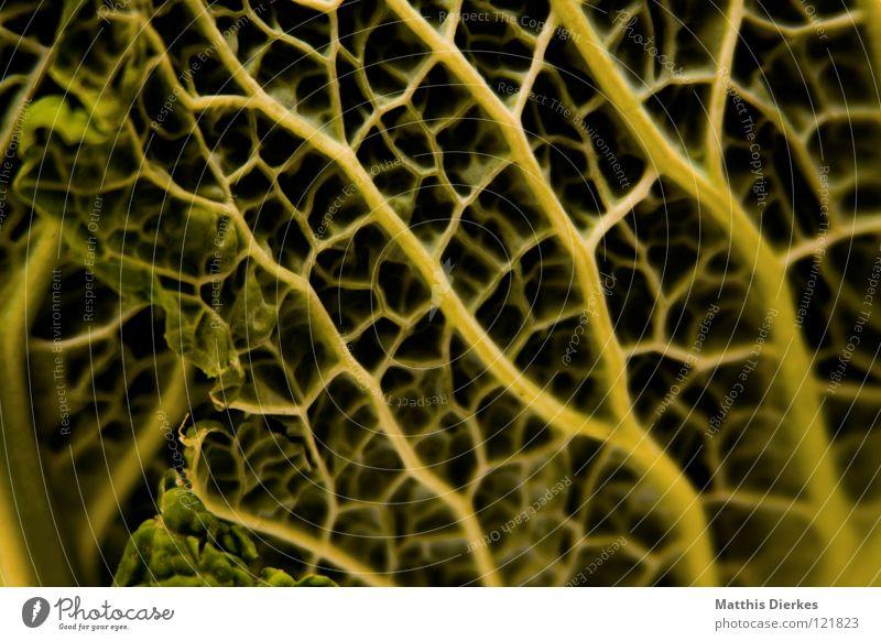 Wirsing Kohl Raster lecker grün Sommer Gemüsekohl Kreuzblütengewächse schön zart Mahlzeit Mittagessen kulinarisch Abendessen Beilage Vitamin Eintopf Rouladen