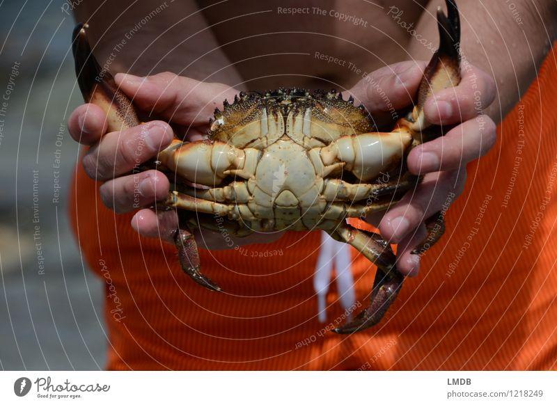 Mr. Crabs Tier 1 orange Krabbe Krebs Taschenkrebs Gebiss Meer Meerestier Panzer gefangen Erfolg Nervenkitzel wehrhaft ausgeliefert Strand zwicken Farbfoto