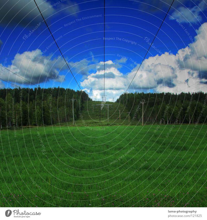 Im Land der Elche II Wiese Gras grün Feld Strukturen & Formen Wald Waldrand Baum Nadelwald Blume Sonne Sommer Frühling Physik Wolken Wolkenberg Kumulus