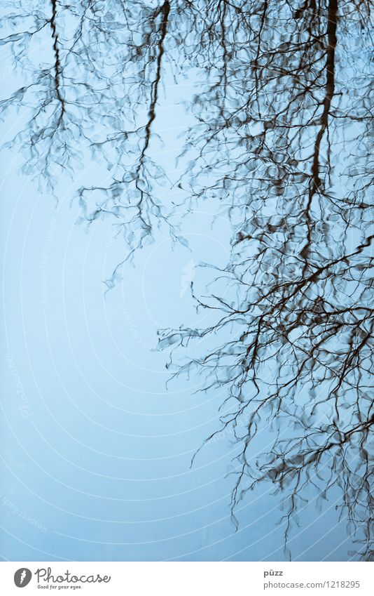 Mirror Lake Umwelt Natur Landschaft Pflanze Urelemente Wasser Himmel Wolkenloser Himmel Wetter Baum Wildpflanze Seeufer Flussufer Moor Sumpf Teich Bach blau
