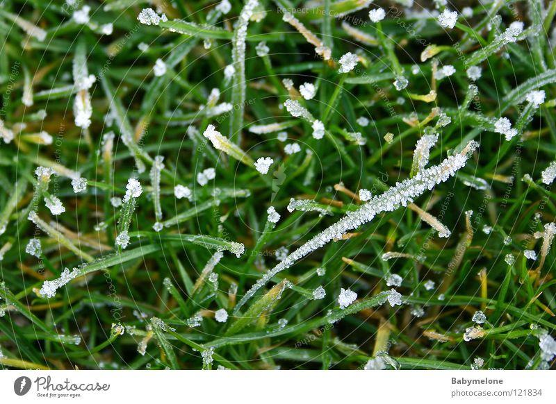 Die Überreste des Winters Natur grün kalt Schnee Wiese Gras Eis glänzend Frost gefroren frieren Halm November Raureif Dezember