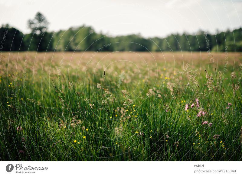 Spreedorado | Sommerwiese Natur Landschaft Pflanze Himmel Wolkenloser Himmel Horizont Schönes Wetter Baum Blume Gras Wiese Wald Blühend Idylle sommerlich