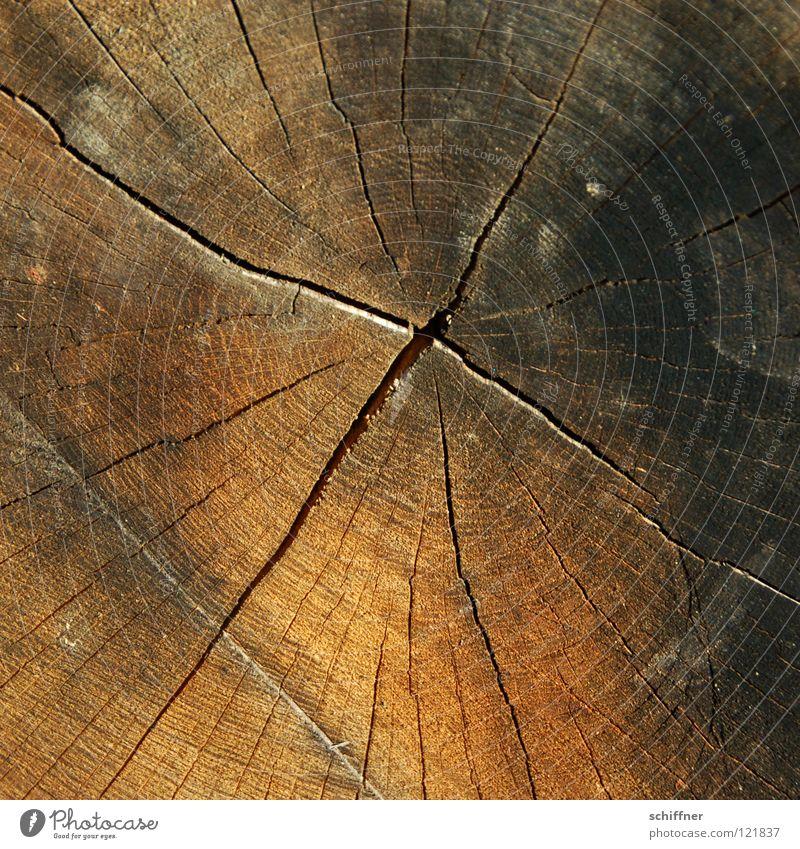 Abgesägt Holz Baumstamm Rohstoffe & Kraftstoffe Brennholz Forstwirtschaft Säge Holzfäller Baum fällen Abholzung Waldsterben Winter Herbst Jahresringe braun