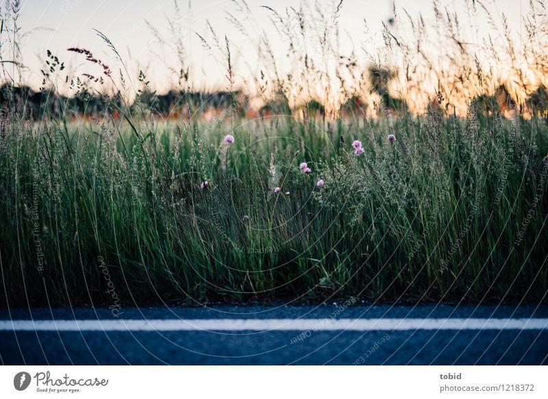 Spreedorado | Straßenrand Natur Landschaft Pflanze Himmel Wolkenloser Himmel Horizont Sommer Schönes Wetter Baum Blume Gras Wiese Feld Idylle Ferne Asphalt