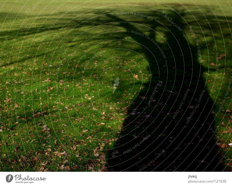 Suchbild unsichtbar Gras grün braun Pflanze Baum Wachstum Blatt Herbst Winter Licht Park Vergänglichkeit Silhouette verzweigt Schatten Versteck Rasen verrückt
