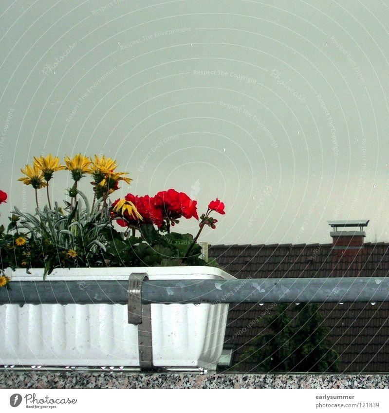 Unentschlossener Sommer Himmel weiß Baum Blume grün Pflanze rot Haus Wolken gelb kalt Herbst Fenster Blüte Frühling
