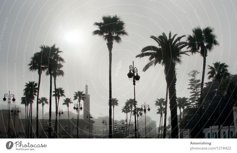 Palmen im Nebel Himmel Natur Stadt Pflanze Sommer weiß Baum Haus dunkel schwarz Reisefotografie Umwelt grau Park Wetter
