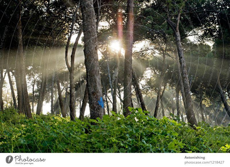 die Sonne Marokkos Umwelt Natur Landschaft Pflanze Luft Sonnenaufgang Sonnenuntergang Sonnenlicht Sommer Wetter Schönes Wetter Baum Sträucher Park Wald hell