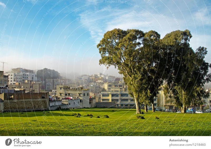 in Tanger Umwelt Natur Landschaft Pflanze Himmel Wolken Horizont Sommer Wetter Schönes Wetter Baum Gras Sträucher Park Wiese Marokko Afrika Hafenstadt Haus