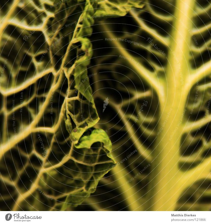 Wirsing III grün schön Sommer Gesundheit Deutschland Ernährung Schnur zart Gemüse Falte lecker Kasten Abendessen Mahlzeit Mittagessen Vitamin