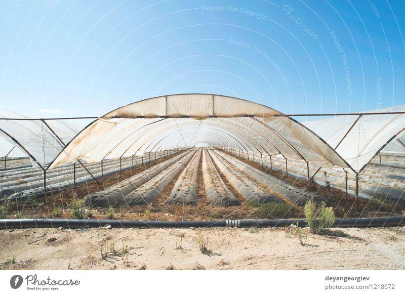 Gewächshaus ohne Pflanzen Natur grün Garten Business Wachstum Perspektive Industrie Gemüse Ernte Bauernhof Ackerbau Botanik Gartenarbeit organisch Gartenbau
