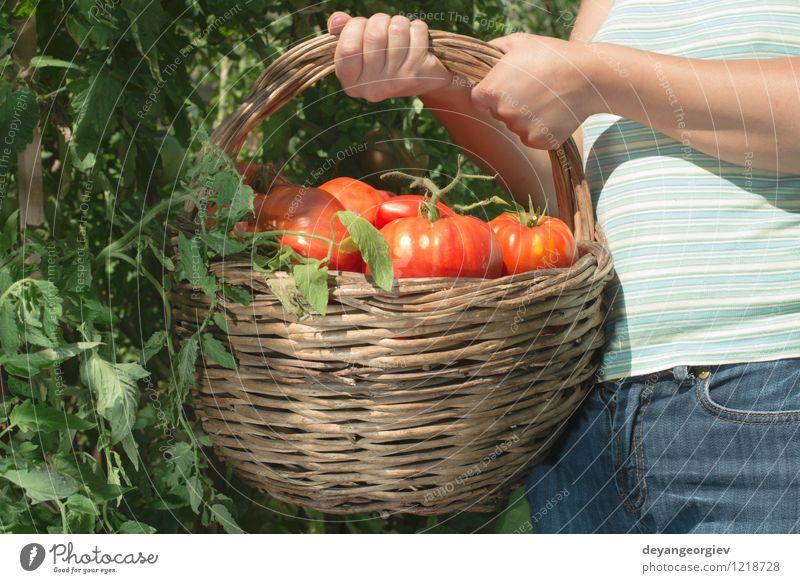 Tomaten im Korb auswählend Mensch Frau Natur Pflanze grün Sommer rot Hand Erwachsene natürlich Garten Lifestyle Frucht frisch Gemüse Ernte