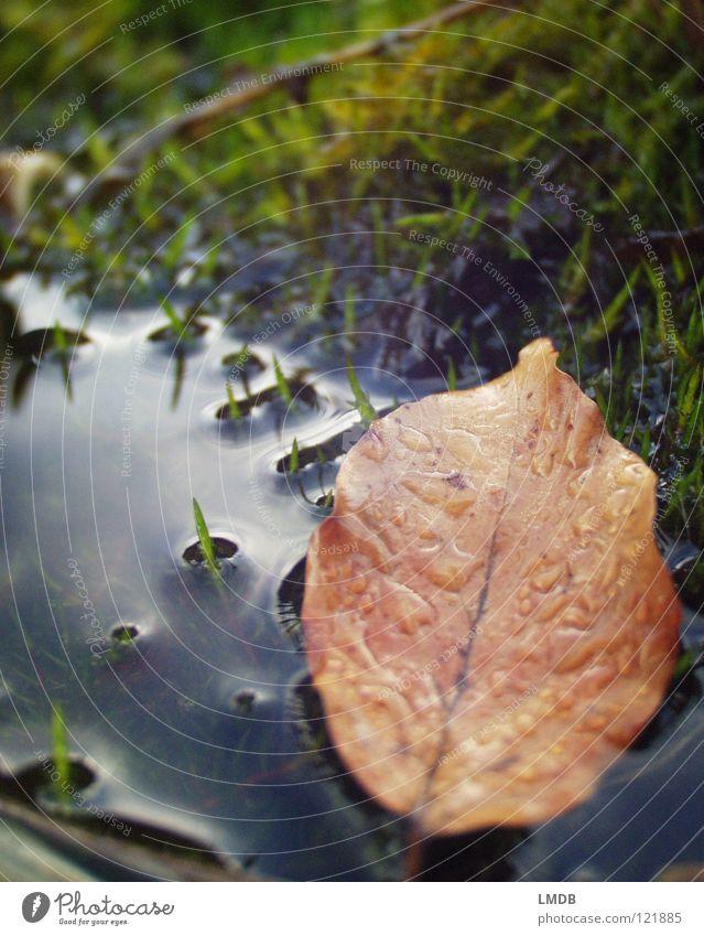Trauer um letzten Herbst Natur blau Wasser grün Baum rot Pflanze Blatt gelb Tod Leben Wiese Traurigkeit Zeit braun