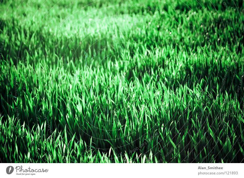 grass grün Wiese Gras Sommer Natur Park Hintergrundbild meadow ground Bodenbelag Rasen lawn Außenaufnahme