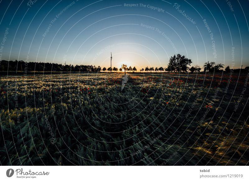 Spreedorado | Schatten Natur Landschaft Pflanze Himmel Wolkenloser Himmel Horizont Sonne Sommer Schönes Wetter Baum Nutzpflanze Getreide Ähren Mohn Mohnblüte