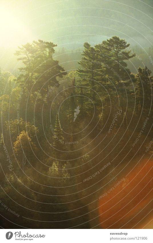 searchmont Wald Morgen Baum Kanada Nordamerika Gegenlicht Morgennebel Sonne Morgendämmerung Natur
