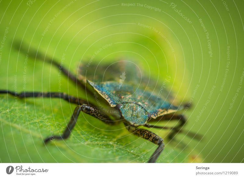 Wanze Tier fliegen Tiergesicht Fressen krabbeln Käfer
