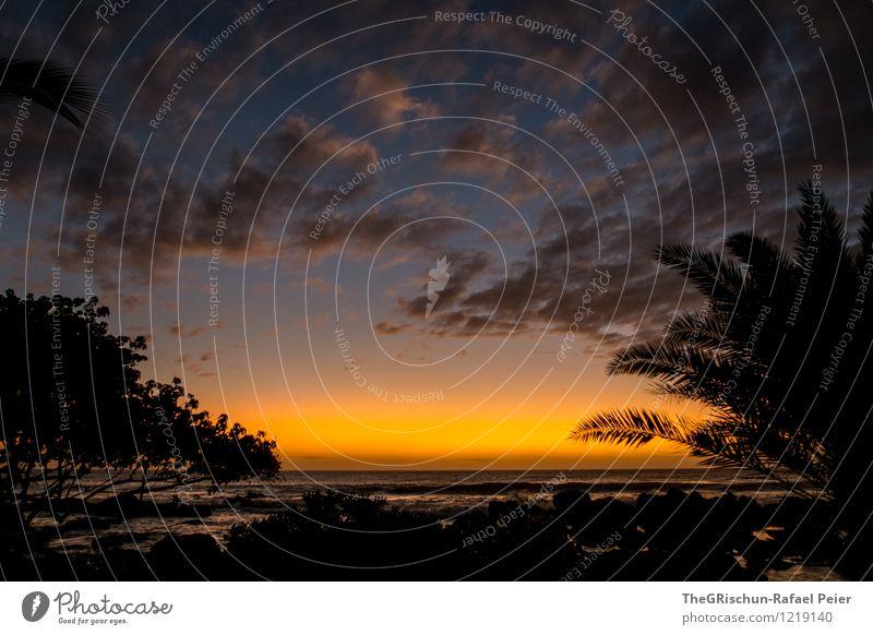 Stimmung Natur Landschaft Küste grau orange schwarz Palme Palmenstrand Mauritius Sonnenuntergang Stimmungsbild Wolken Horizont Meer Erholung