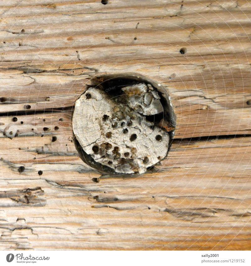 das Runde im Eckigen...incl.Holzwurm... Fassade alt Fressen Verfall Vergänglichkeit Zerstörung holzwurm rund Balken Holzbrett Astloch angefressen eingepasst
