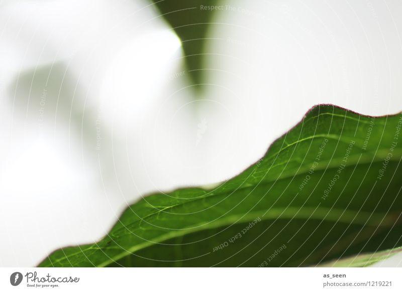 Blätterdach Natur Ferien & Urlaub & Reisen Pflanze grün Sommer Sonne Baum Blatt ruhig Leben Bewegung natürlich Gesundheit Garten Stimmung Zufriedenheit