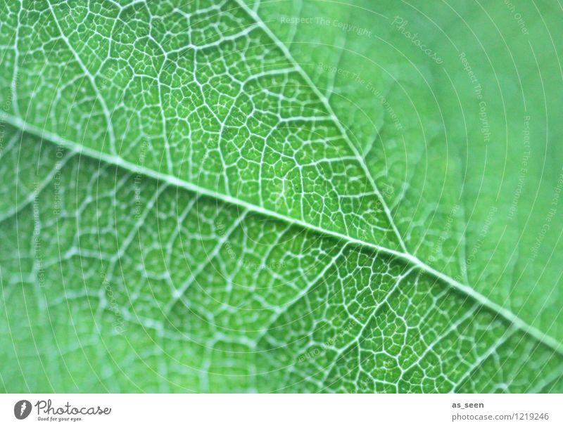 Vernetzt Natur Pflanze schön grün Farbe Sommer Blatt ruhig Leben Frühling Wege & Pfade Gesundheit Garten Gesundheitswesen Wachstum ästhetisch