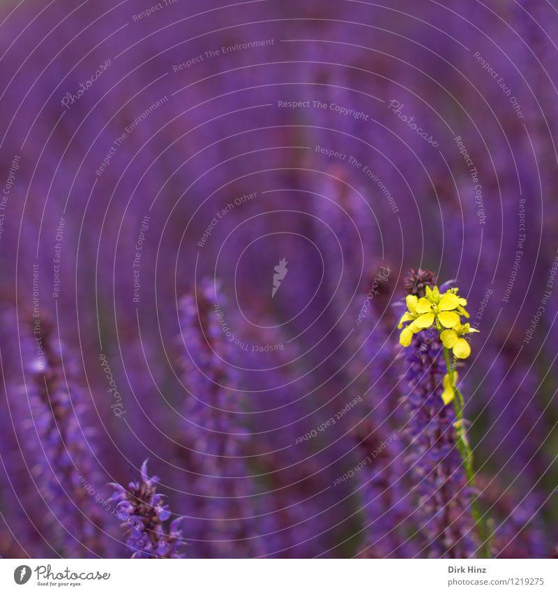 Gelber Individualist Natur Pflanze schön Sommer Blume Landschaft Umwelt gelb Frühling Blüte Garten außergewöhnlich Park wild einzigartig Zeichen