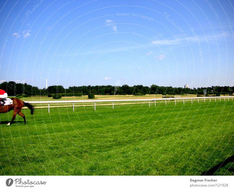 Die Letzten werden die Ersten sein... Himmel blau grün Sport Gras laufen Erfolg Pferd Rasen Geländer Ende Hinterteil Rennsport Köln Säugetier Rennbahn