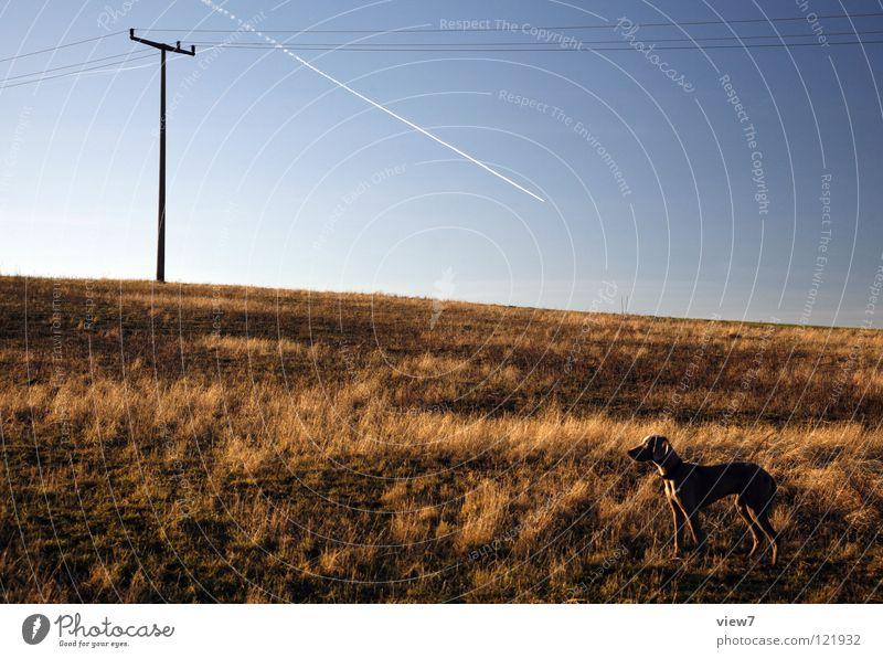 Richtungen Natur schön Himmel blau Winter Einsamkeit grau Hund braun Feld klein Flugzeug groß Horizont leer Elektrizität