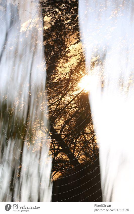 Sonnenbaum Natur Ferien & Urlaub & Reisen blau Pflanze Baum Erholung Landschaft Tier Wald Stil Lifestyle Kunst Park Design orange träumen