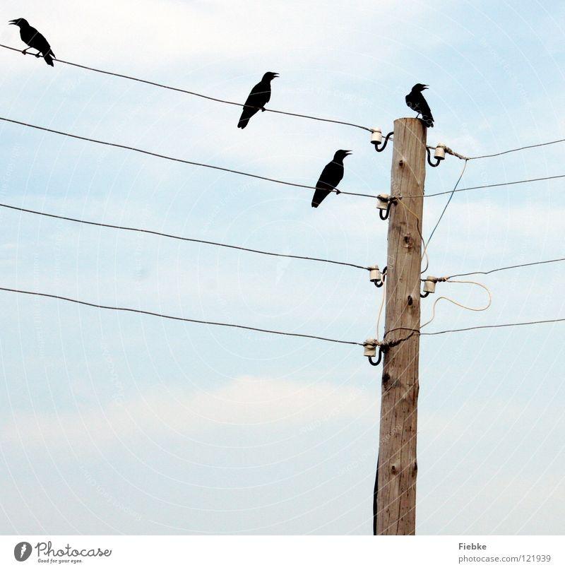 Pechvögel? Natur alt Himmel blau ruhig schwarz Herbst Freiheit Holz Traurigkeit Linie hell Vogel Trauer mehrere