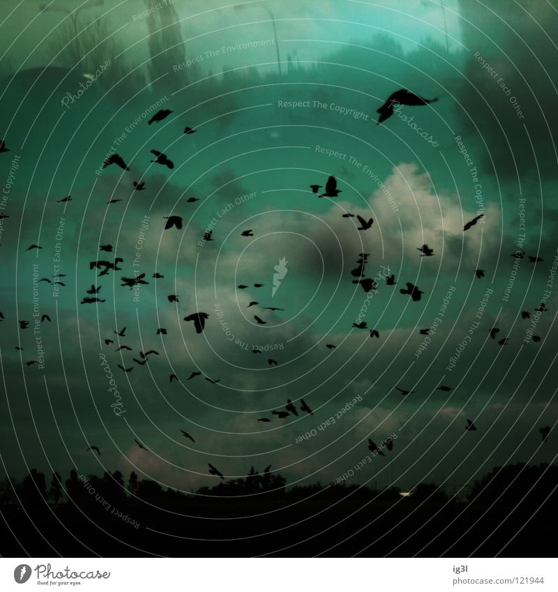 TRAUM°BILDER # unterirdische welten`´´´ Himmel schön schwarz Landschaft Denken träumen Vogel fliegen außergewöhnlich Wald Zukunft Wandel & Veränderung Kommunizieren Vergänglichkeit Schutz Flucht