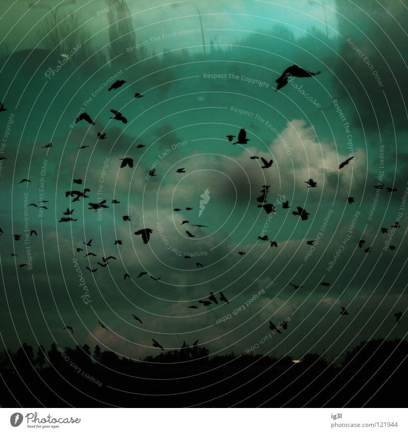 TRAUM°BILDER # unterirdische welten`´´´ Traumwelt träumen Gedanke wirklich hell-blau zart Wolkenberg Nikolausmütze Vogel falsch fremdartig Geborgenheit