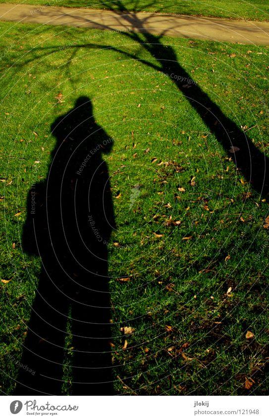 Bodenbewuchs Mensch Baum Sonne grün Pflanze Winter Blatt Herbst Gras Garten Wege & Pfade Park Sand braun verrückt Wachstum