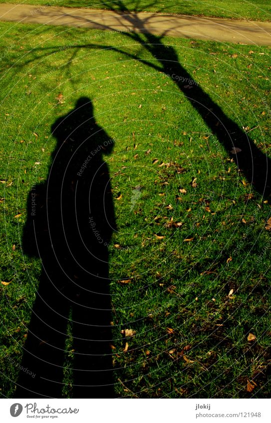 Bodenbewuchs unsichtbar Gras grün braun Pflanze Baum Wachstum Blatt Herbst Winter Licht Park Vergänglichkeit Silhouette verzweigt Fotograf Tasche lang Garten