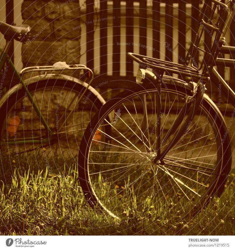 Fahrrad-Nostalgie Lifestyle Stil Design Freude sportlich Wohlgefühl Erholung ruhig Freizeit & Hobby Radfahren Freiheit Sommer Stadtrand Gartenzaun alt