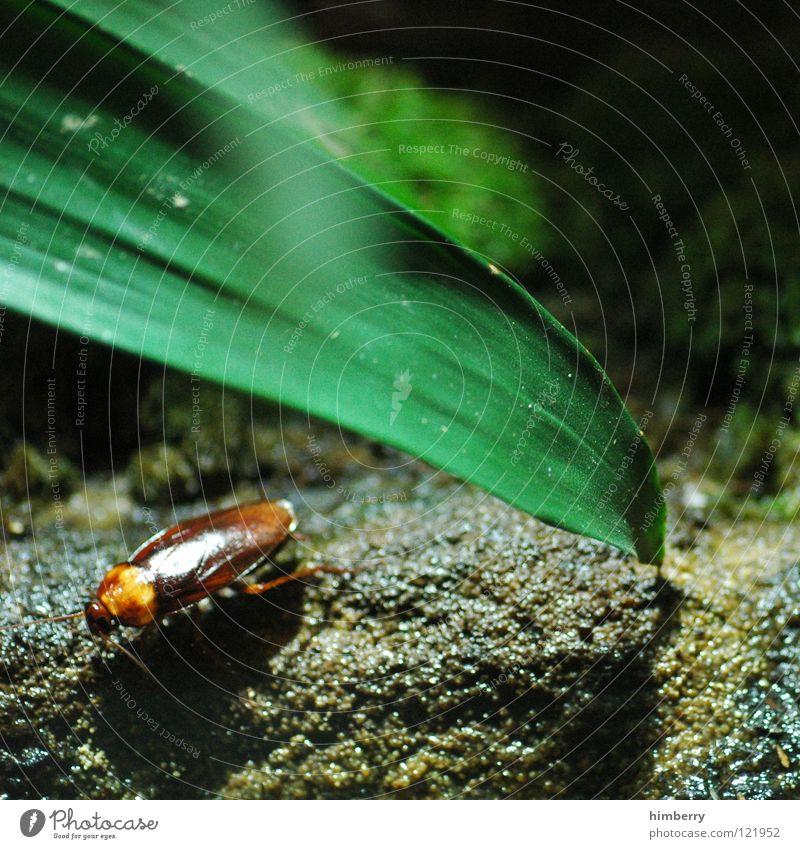 russell crowe Natur grün Tier Landwirtschaft Lebewesen Insekt Käfer Schädlinge Plage