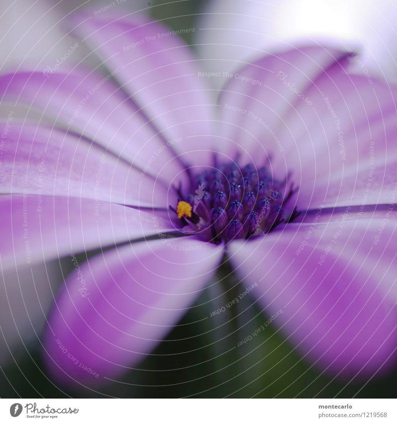 dot Natur Pflanze Blume Blatt Umwelt Blüte natürlich klein orange wild frisch authentisch einfach weich rund violett