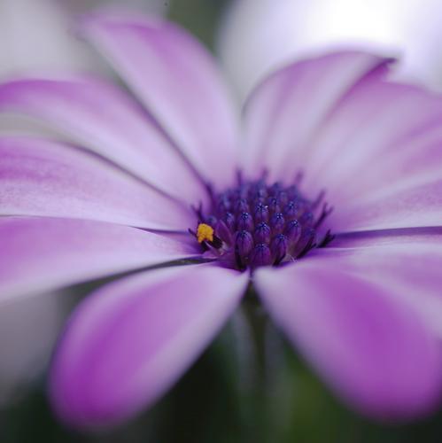 dot Umwelt Natur Pflanze Blume Blatt Blüte Grünpflanze Wildpflanze Duft dünn authentisch einfach frisch klein nah natürlich neu rund wild weich violett orange