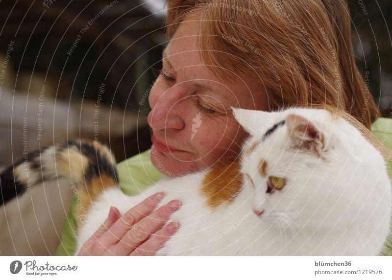 Kuschelgruppe Katze Mensch Frau Hand Gesicht Erwachsene Gefühle natürlich feminin Glück Kopf 45-60 Jahre genießen Lächeln Finger einzigartig