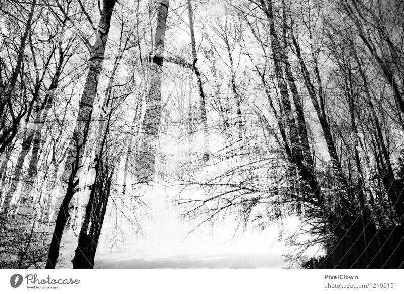 strahlender Wald Natur Ferien & Urlaub & Reisen weiß Landschaft Tier schwarz Gefühle Stil außergewöhnlich Kunst Stimmung Park träumen Tourismus elegant