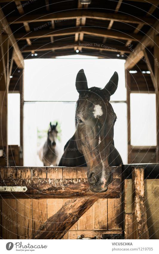 Artgerechte Pferde Haltung im Offenstall Lifestyle Sommer Natur Dorf Tor Gebäude Mauer Wand Fenster Tür Dach Tier einfach Ranch Stall Pferdestall artgerecht