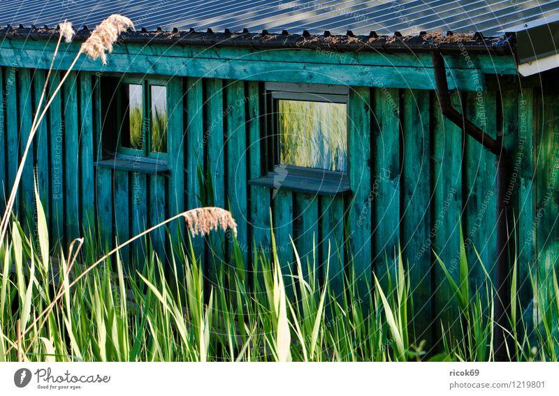 Detail eines Boothauses Natur blau Pflanze grün Landschaft Haus Küste Holz See Dach Seeufer Schilfrohr Mecklenburg-Vorpommern Regenrinne Bootshaus Krakow