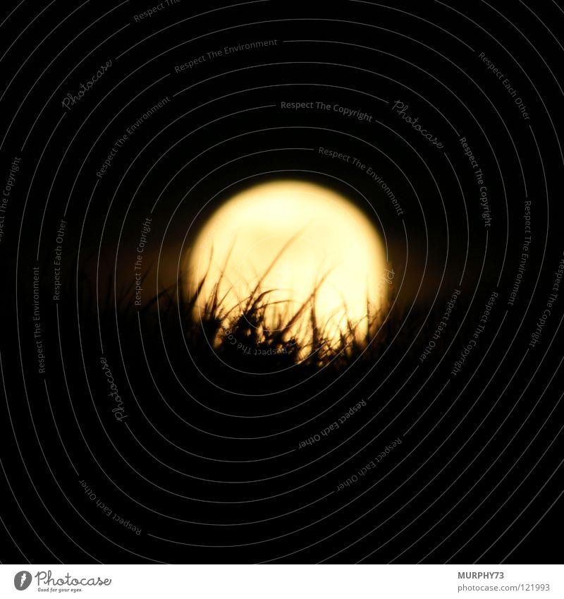 Das Gras im Mond Nachthimmel Silhouette Nachtaufnahme gelb weiß schwarz Himmelskörper & Weltall Mondscheibe helle Scheibe Schatten